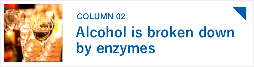 Alcohol is broken down by enzymes